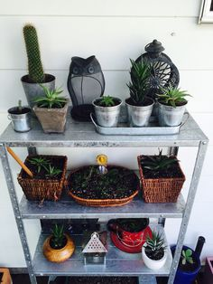 Repotted my succulents and dragged some old shelving out of the garden shed to arrange them on