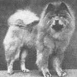 1919 chow - chow. Dog Evolution - Chow-Chow - Kutya Portál. Kutya Evolúció - Chow-Chow - Kutya Portál.