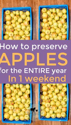 How to Preserve Apples 15 different ways! We've rounded up the best apple preserving recipes and tips for preserving your apples during harvest season. How to make apple butter, sauce, chutney +. Canning Tips, Home Canning, Canning Recipes, Preserving Apples, Preserving Food, Canning Food Preservation, Canned Food Storage, Produce Storage, Nutrition