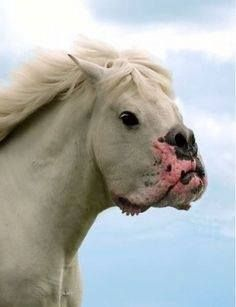 No bullshit but bullhorse ??