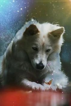 Wolf Pictures, Baby Animals Pictures, Beautiful Wolves, Animals Beautiful, Fantasy Wolf, Fantasy Art, Happy Friday Dance, Snow Wolf, Magical Pictures