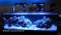 "nuvo shallow reef aquarium 48"" x 24"" x 16"" 80 gallons"