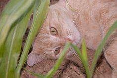 O gato Tareco