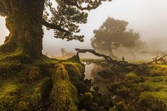 View of the Laurisilva (Laurel Forest) island of Madeira Portugal by Jorge Nelson Alves [19201282] #reddit