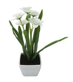 Blooming Spring Narcissus Pot-Cream
