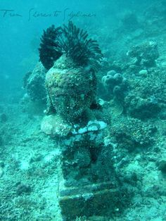 Underwater Buddha statues at the Underwater Temple Garden in Bali - great dive site!