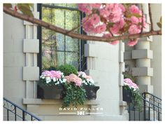 black window boxes with pink hydrangeas, boxwood, pussy willows, white flowers and ivy