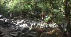 #waterfall #roadtrip #great #ocean #road #australia #lorne #tropical #tropicalforest #greatoceanroad by jenninoeud
