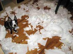 funny pets, funny animals, cat, animal funnies, funny animal pictures, funny pugs, funny pictures, dog pictures, toilet paper