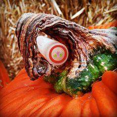 All natural Pumpkin Spice lip balm!  Handmade by ALoNaturals.com!