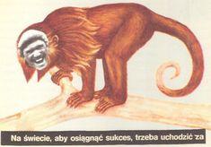 Collage Postcard by Wislawa Szymborska (to Wandy Klominkowej, Collages, Lion Sculpture, Statue, Portrait, Gallery, Art, Craft Art, Collage, Headshot Photography
