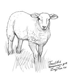 How to draw a sheep step by step 4 Sheep Paintings, Animal Paintings, Animal Sketches, Animal Drawings, Pencil Art Drawings, Cute Drawings, Sheep Drawing, Sheep Illustration, Sheep Art