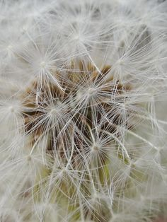 up close to a wish