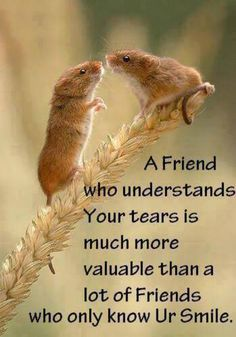True Friends, well, fewer and fewer BUT when you find one HOLD Friends Are Like, True Friends, New Friends, Friend Friendship, Friendship Quotes, Just Be You, Told You So, Great Quotes, Inspirational Quotes