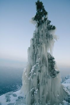 Frozen tree - Lake Lagoda, Russia.