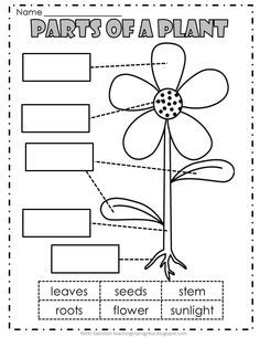Image result for parts of a plant worksheets printables