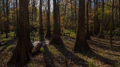 Congaree National Park, located in the heart of South Carolina, is a land of towering trees, of floods and fire, of woodland paths and water trails used by people for more than 10,000 years. This ra…