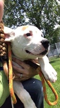 Urgent - darling puppy needs out of animal control now https://www.facebook.com/226541667442185/photos/a.226895917406760.48995.226541667442185/643310002432014/?type=1theater