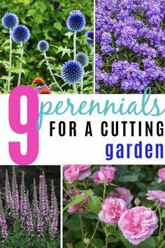 Full Sun Perennials, Full Sun Plants, Flowers Perennials, Full Sun Garden, Shade Perennials, Cut Flower Garden, Flower Farm, Cut Garden, Flower Garden Design