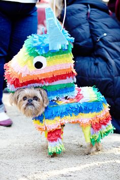 The Clever Dogs Who Won At Halloween #refinery29  http://www.refinery29.com/dog-costumes#slide-1  A pup piñata!