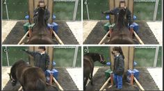 Horse personality's influence on learning seen in French study