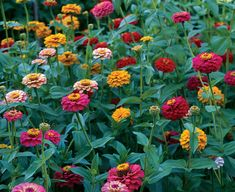 Attract Butterflies!! Here's the best flowers to grow:   Coreopsis,   Cosmos,   Gaillardia,   Gomphrena   (bachelor button),  Marigold,   Periwinkle,   Queen Anne's Lace,   Verbena,   Zinnia (the best)    -Ali C.