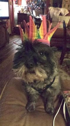 Col. Potter Cairn Rescue Network: Sunday Sweets! Queen Tori