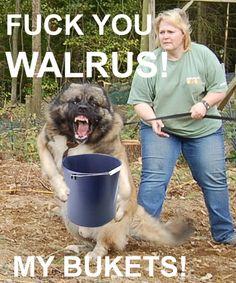 Stupid walrus, that bucket is totally mine