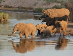 Parc Kruger - Afrique du Sud Plus African Animals, African Safari, Elephant Afrique, Have A Nice Trip, Le Cap, Les Continents, Out Of Africa, Game Reserve, Africa Travel