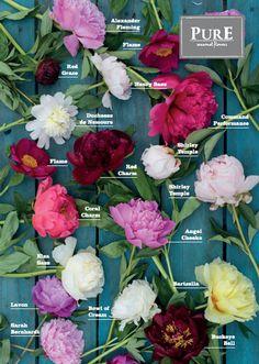 Arrangements Ikebana, Floral Arrangements, Peony Arrangement, Peonies Centerpiece, Fresh Flowers, Beautiful Flowers, Exotic Flowers, Cut Flowers, Purple Flowers