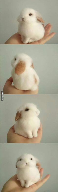 This tiny bunny is so precious that it almost doesn't look real, but rather a stuffed fuzzy little rabbit.