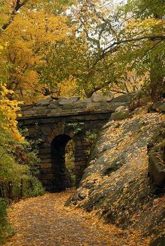 Autumn Arch, Central Park, NYC╰☆╮ ❤❥*~✿Ophelia Ryan✿*~❥❤