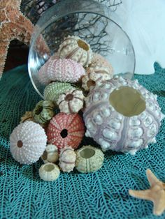 Sea Urchins Sampler Pack/ Colorful Natural Sea Urchin Shells/ Violet, Pink, Green/ Decorating ideas for your Beach Home by seashellsbyseashore on Etsy Sea Urchin Shell, Sea Urchins, Sea Shells, Coastal Style, Coastal Decor, Coastal Living, Seashell Crafts, Seashell Projects, Beach Crafts