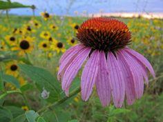 Wild Flowers by Amy Van Norman