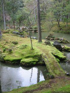 garden: moss