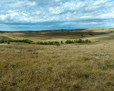This North Dakota property is one sportsmen will enjoy hunting the many ravines, small buttes, and heavy tree rows. Hunting Land For Sale, Ranches For Sale, North Dakota, Property For Sale, The Row, Nature, Travel, Beauty, Food