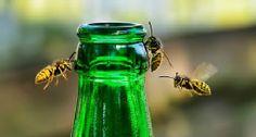 Wespen an einer Flasche