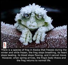 Rare species of Frog — Steemit Rare Species, Natural Instinct, Animal Kingdom, Nature, Animals, Posts, Naturaleza, Animales, Messages
