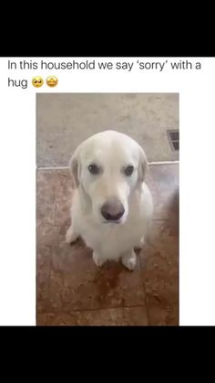Funny Animal Jokes, Funny Dog Memes, Funny Dog Videos, Funny Animal Sayings, Animal Memes, Cute Funny Dogs, Cute Funny Animals, Cute Animal Videos, Cute Videos