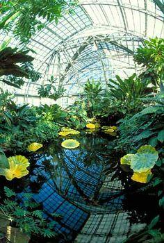 Jardines de cristal: Dale Chihuli y el arte del vidrio soplado