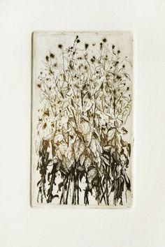 "Marta Galisz ""Polne"" akwaforta / etching How To Dry Basil, Herbs, Herb, Medicinal Plants"