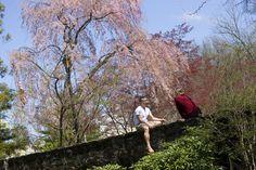 Eastern is beautiful in the Spring!  www.eastern.edu