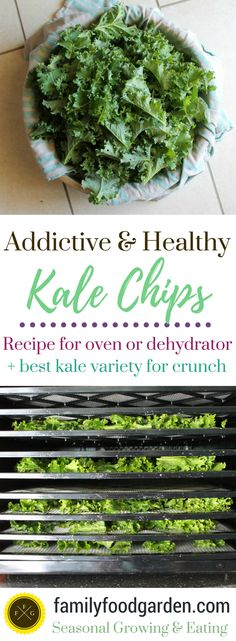 Here's a crispy kale chip recipe that's super easy. Dehydrated or baked kale chip recipe. Homemade kale chips are nutritious and tasty! Healthy Kale Chips, Homemade Kale Chips, Dehydrated Vegetables, Veggies, Raw Kale Chips Recipe, Homemade Jerky, Kale Chip Recipes, Raw Food Recipes, Snacks
