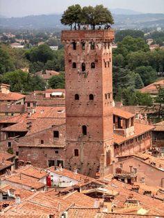 #Lucca con un'immagine della Torre Guinigi, uno dei simboli della città. Risalente al XIV secolo, è probabilmente il più riconoscibile edificio di Lucca anche per la sua peculiarissima particolarità: sulla sua sommità svettano alcune piante di leccio.