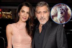 George Clooney e esposa pegam cãozinho com deficiência em abrigo >> http://glo.bo/1m1QmvF