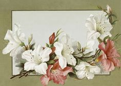 Antique Red and White Lily Calling Card Image!