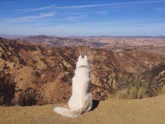 Un cane trovato per strada e un ragazzo in cerca di avventura, la storia di John e Wolf che da due anni sono in viaggio negli Stati Uniti