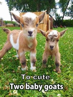 Too cute!  ☻/ღ˚ •。* ˚ ˚✰˚ ˛★* 。 ღ˛° 。* °♥ ˚ • ★ *˚ .ღ 。 /▌*˛˚ღ •˚ FOLLOW ME for daily recipes, tips & more!  https://www.fb.com/nan.holzer I'm always posting awesome stuff!  ★Join us for weight loss support, diet tips and more! ★  www.fb.com/groups/HeyBeaYOUtifulWeightloss/  ♥ Follow me on Pinterest! ♥ http://www.pinterest.com/Heybeayoutiful/ ♥