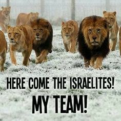 The lions of Judah!!!!
