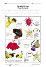 Plants & Pollination Vocab & Photo Flashcards